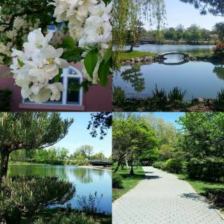 Credits: My classmate S.P took these images and stitched them. We went to one of the beautiful parks in the county and the blossoms remind me of the fullness of life that is even expressed in the creation of God and therefore, even more so the fullness of the joy he wants to be birthed in us