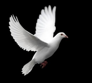 The Dove is often used to symbolize the holy spirit (reference: Luke 3:22)
