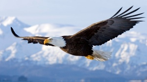 An Eagle Soaring = You Waiting on the Lord